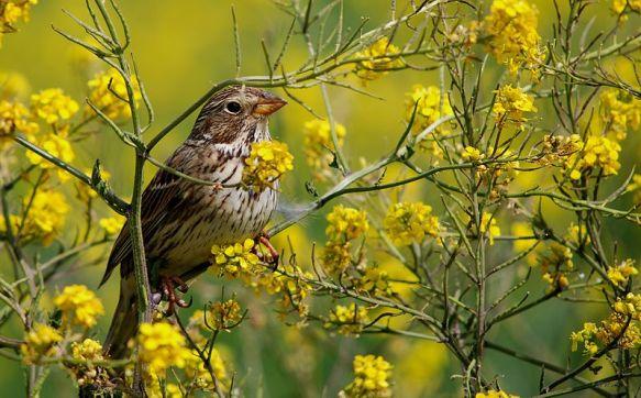 Image result for mustard tree bird