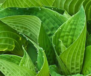 LeafEdges